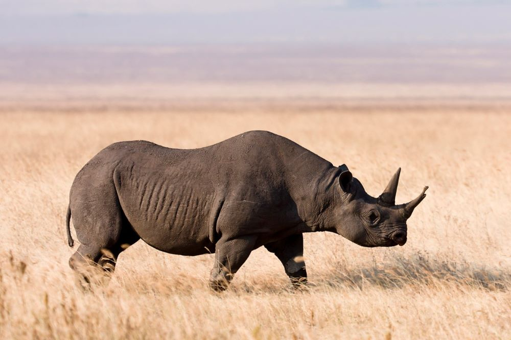 Viajar a Namibia-parque_nacional_de_etosha_rinoceronte_negro