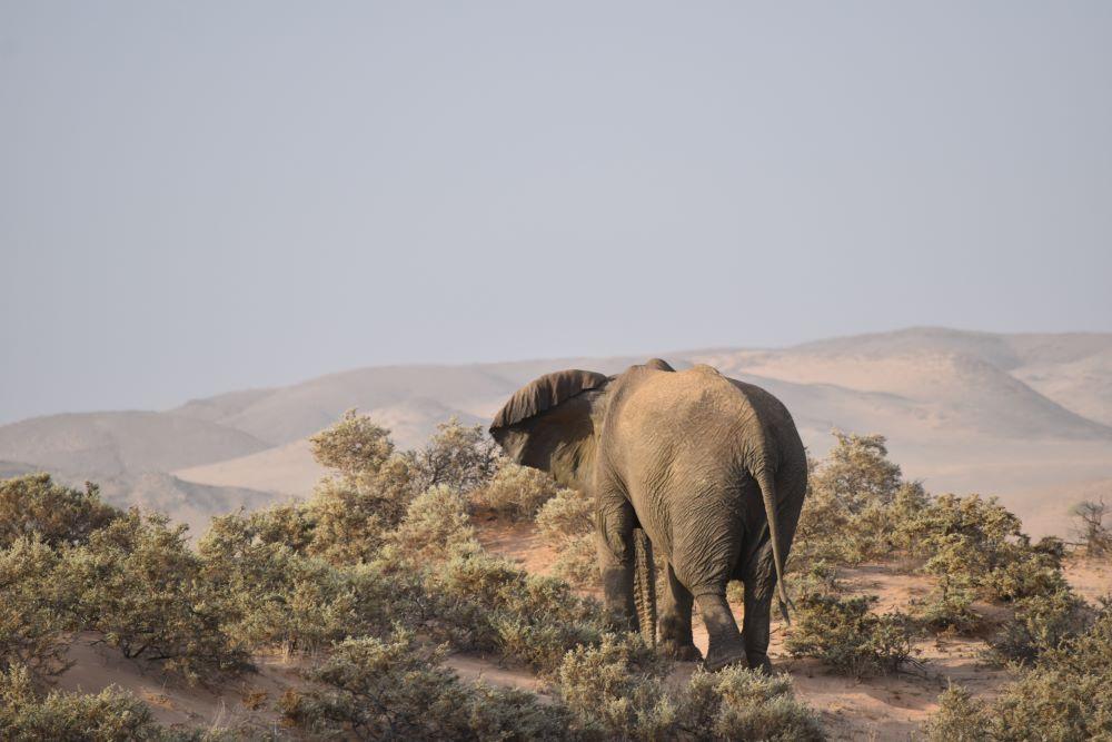 Viajar a Namibia-damaraland-elefante