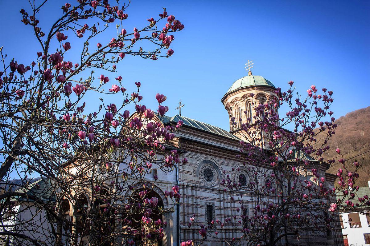 Viajar a Rumania-cozia_magnolii