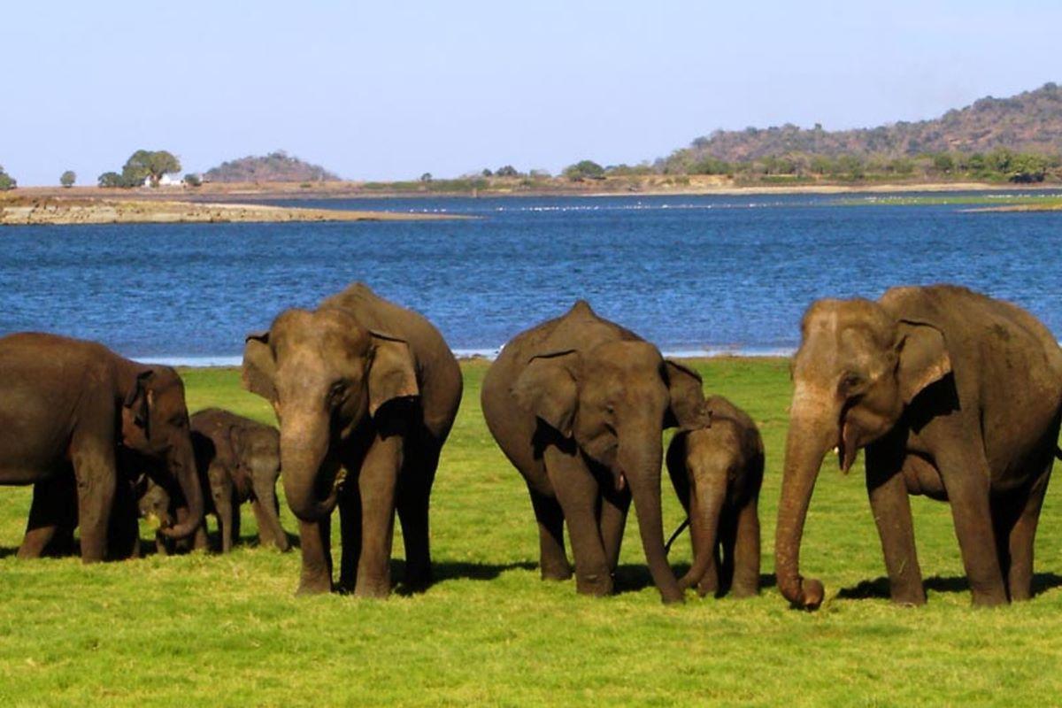 Viajar a Sri Lanka-parque-nacional-de-yala-elefantes