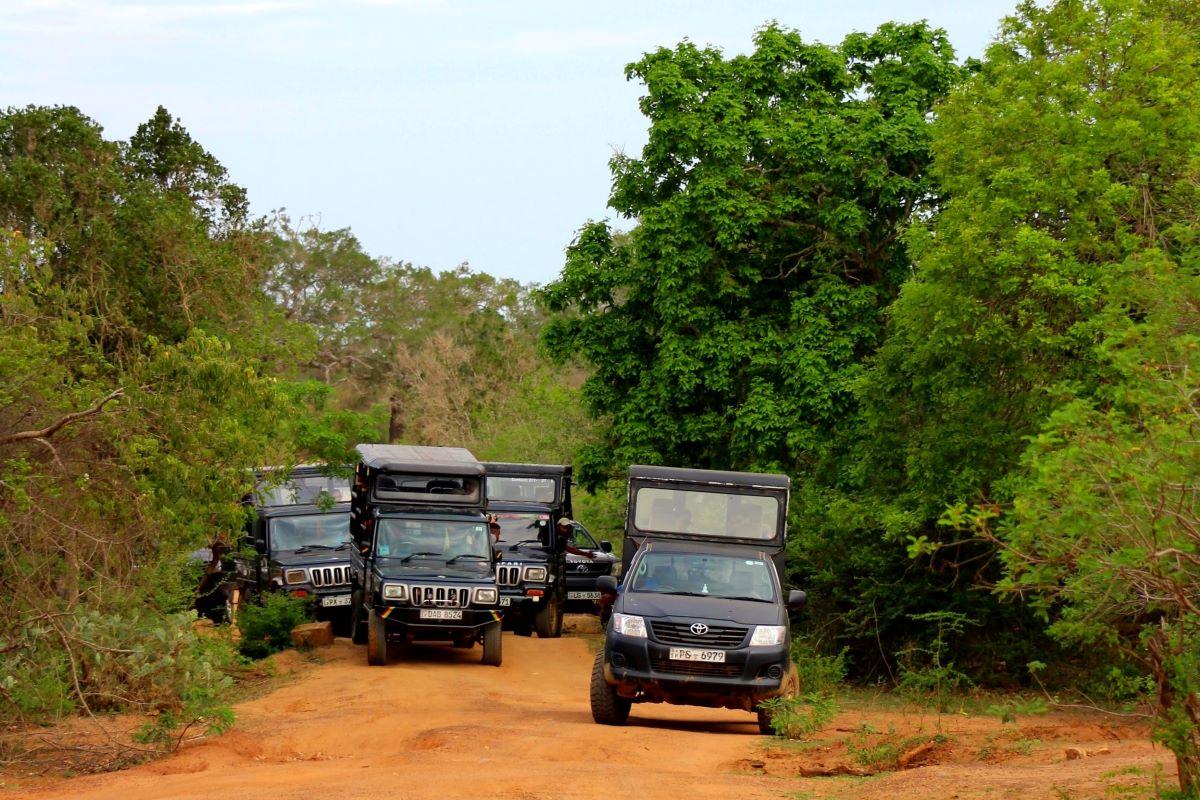 Viajar a Sri Lanka-parque-nacional-de-yala-safari