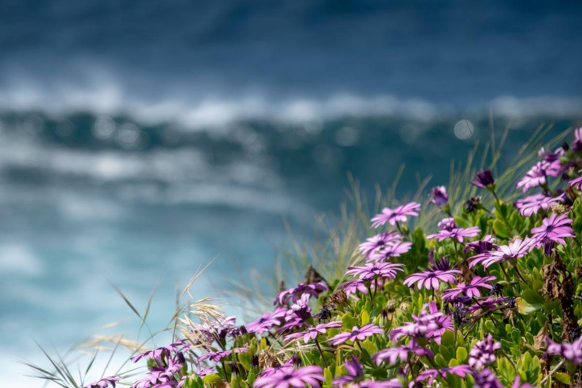 Viajar en familia-Azores-angra