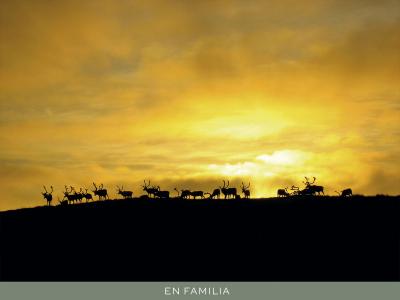 Viajar en familia -Laponia-verano-post