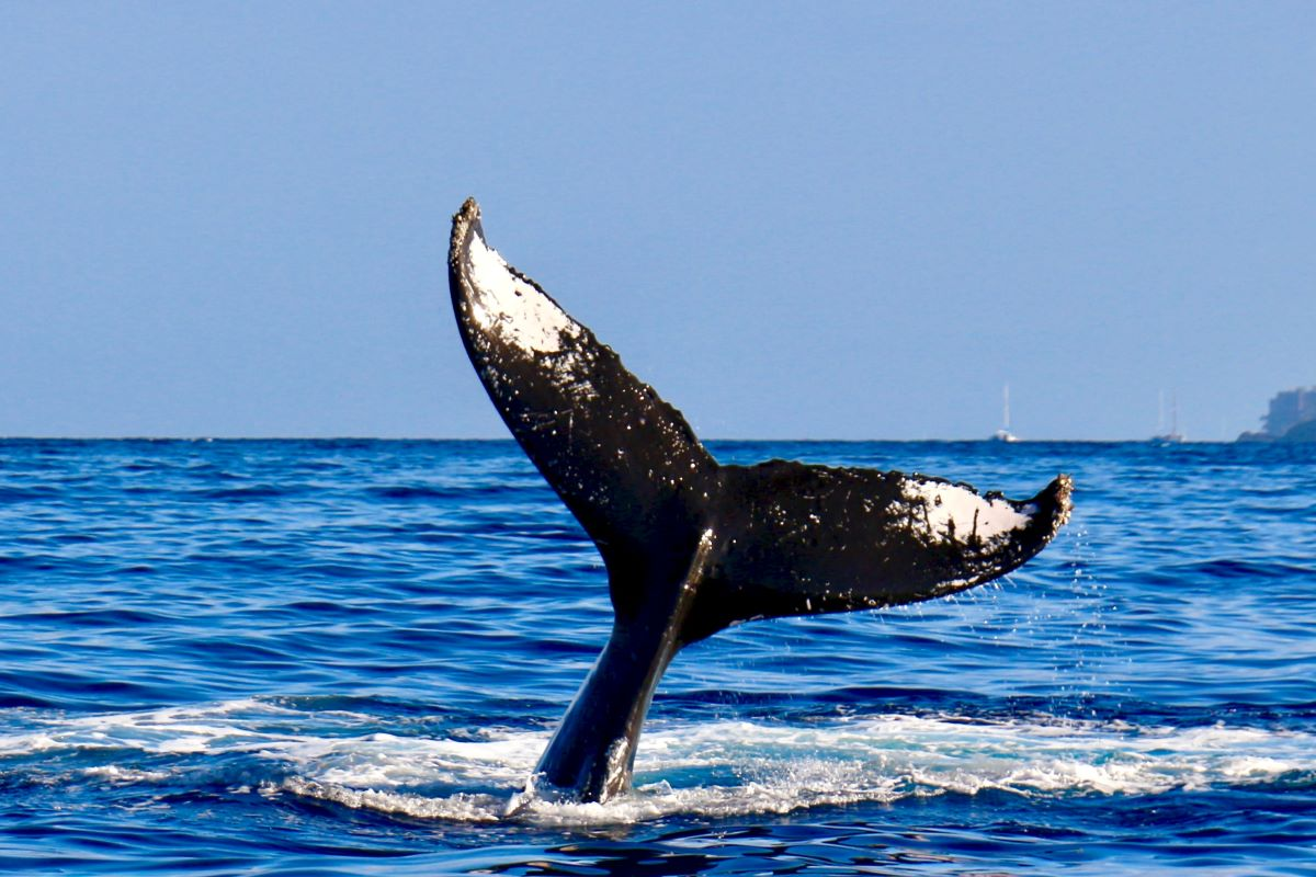 Viajar en familia-Azores-ballena2