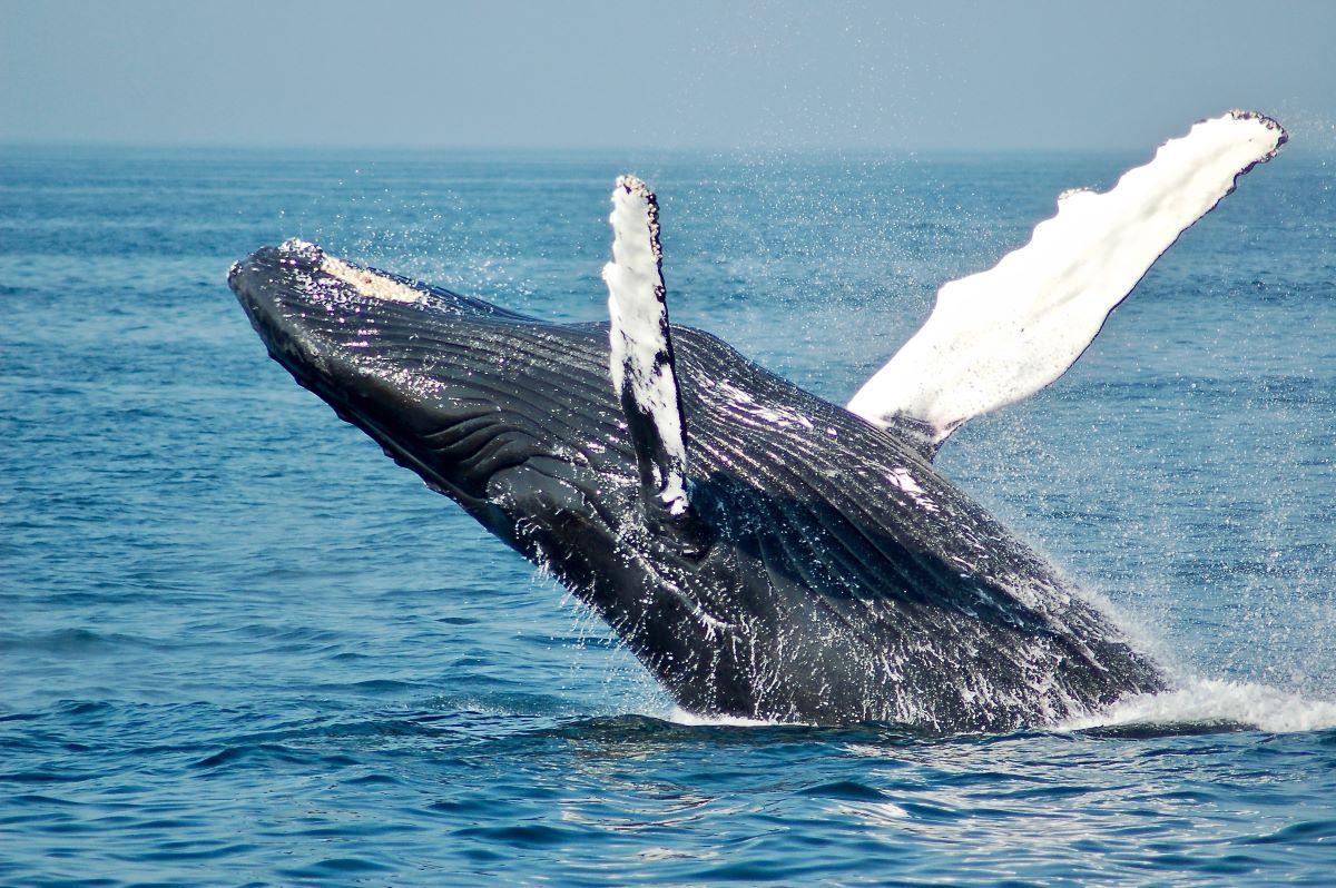 Viajar en familia-Azores-ballena