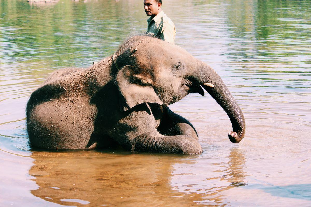 Viajar a Sri Lanka-elefante-bebe