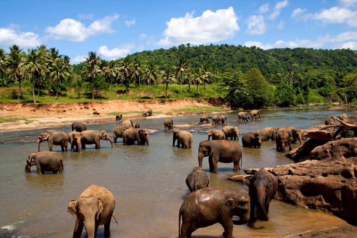 Viajar a Sri Lanka-manada-elefantes