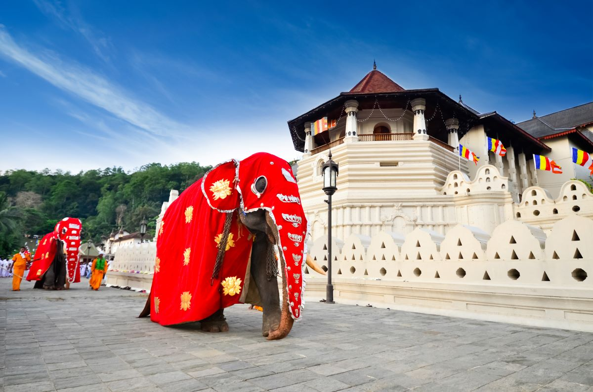Viajar a Sri Lanka-diente-de-buda