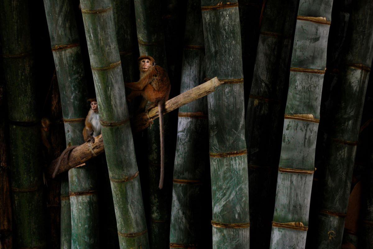 Viajar a Sri Lanka-royal-botanical-gardens-of-peradeniya-kandy