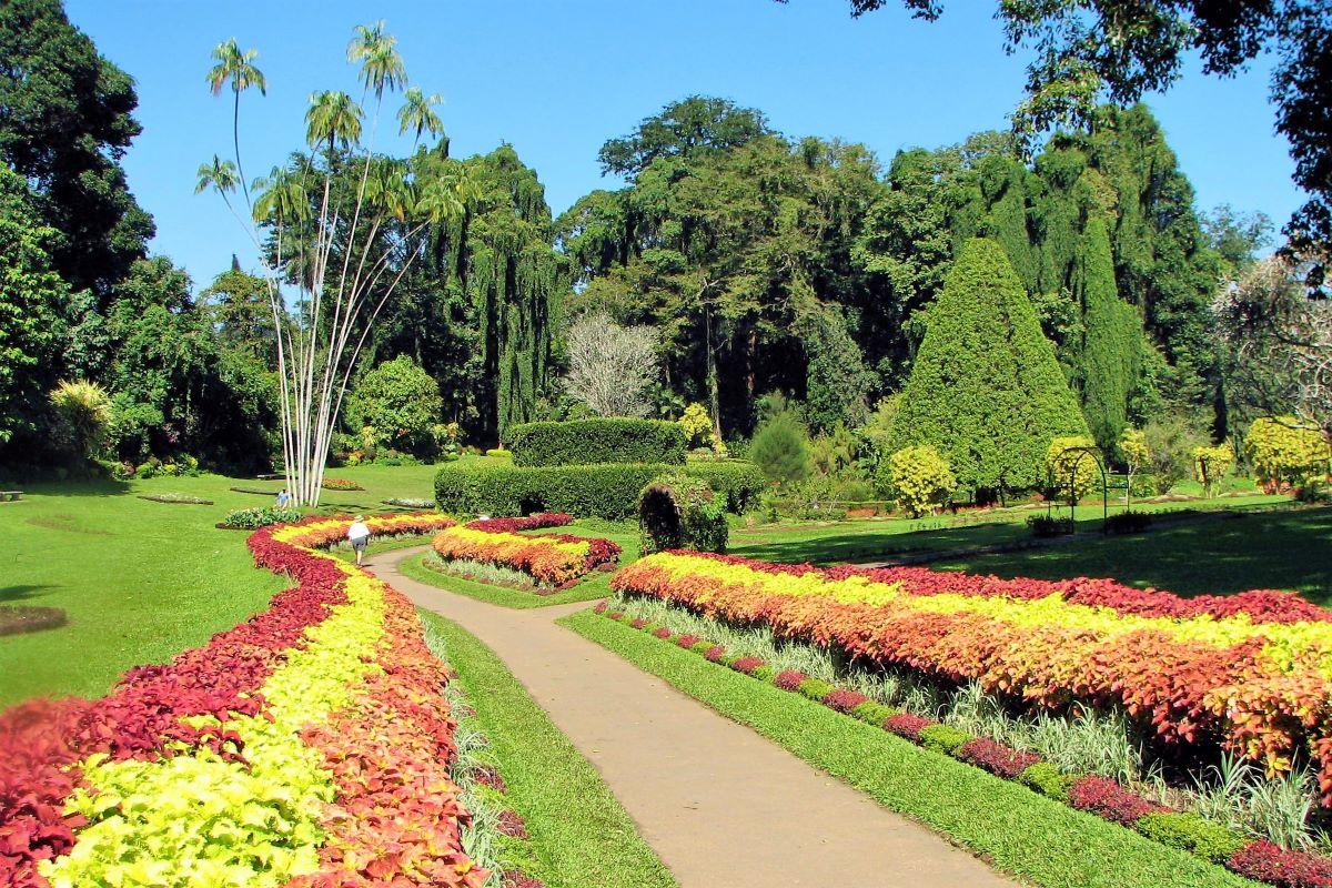 Viajar a Sri Lanka-royal-botanical-gardens-of-peradeniya