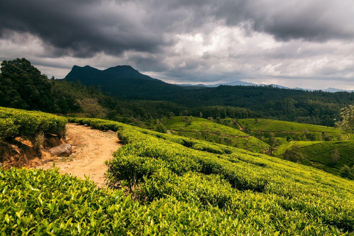 Viajar a Sri Lanka-sri_lanka-nuwara-eliya