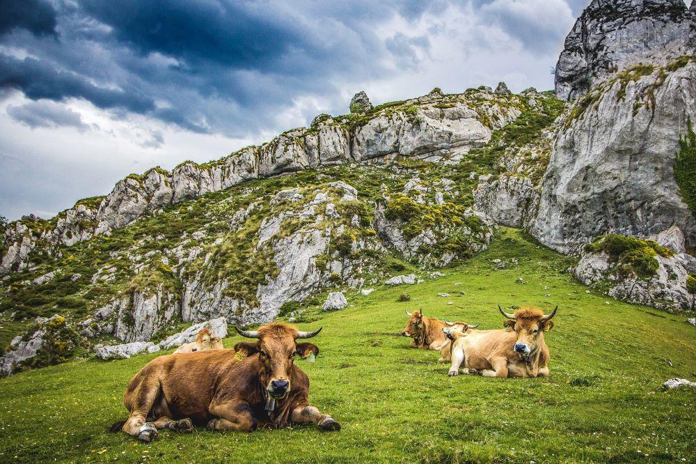 Viajar por España-asturias-picos-europa